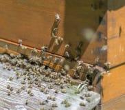 Colmena y abejas Fotografía de archivo libre de regalías