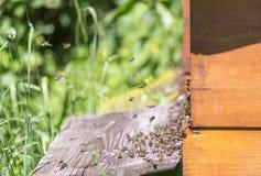Colmena y abejas Foto de archivo