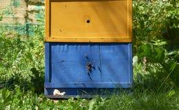 Colmena y abejas Imagen de archivo