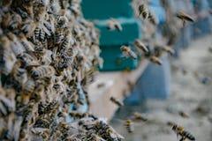 Colmena y abejas al aire libre Fotos de archivo libres de regalías