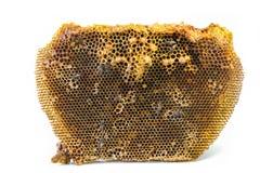 Colmena y las abejas de la miel del enano rojo Fotos de archivo libres de regalías