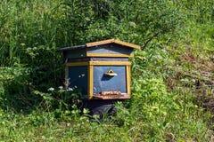 Colmenar, abejas en la misma cabina en el bosque Imagen de archivo