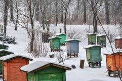 Colmenar, colmenas de la abeja de diversos colores en filas, cubiertas en nieve imagenes de archivo