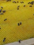 Colmenar de la abeja del panal de la miel Imágenes de archivo libres de regalías