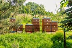 Colmenar de la abeja en el bosque las casas del bosque de la naturaleza de la granja de la abeja de la miel de las abejas Foto de archivo libre de regalías