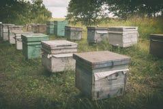Colmenar de la abeja que se coloca cerca del bosque en los campos Imagen de archivo libre de regalías