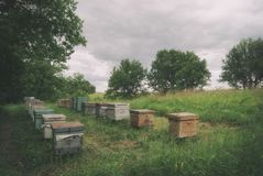 Colmenar de la abeja que se coloca cerca del bosque en los campos Fotos de archivo