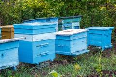 Colmenar de la abeja que se coloca en un jardín verde Fotos de archivo libres de regalías