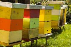 Colmenar del monasterio con muchas abejas Foto de archivo