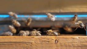 Colmenar del vídeo de la cámara lenta un enjambre de las moscas de abejas en una colmena recoge la miel del oso del polen abeja d almacen de video