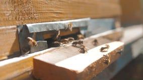 Colmenar del vídeo de la cámara lenta un enjambre de las moscas de abejas en una colmena recoge la miel del oso del polen abeja d metrajes