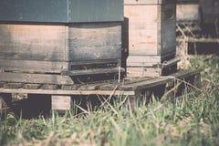 colmenar en el bosque - efecto retro del vintage Foto de archivo