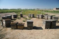Colmenar en Inner Mongolia China fotos de archivo libres de regalías