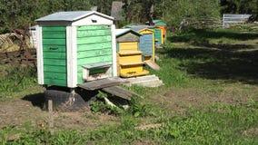 Colmenar en jardín Abejas que vuelan en colmenas coloridas de la abeja 4K almacen de video
