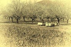 Colmenar en jardín de la almendra Imagenes de archivo