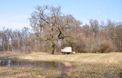 Colmenar en un bosque del terreno de aluvión, Moravia del sur, República Checa Foto de archivo libre de regalías