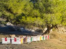 Colmenar en un claro en el bosque de varias casas de abeja Israel Imagen de archivo