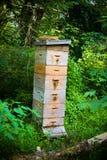 Colmenar grande de la abeja de la miel Fotos de archivo libres de regalías