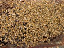 Colmenar Siam Tha de Asia de la miel de los panales de la colmena de las abejas Imagen de archivo libre de regalías