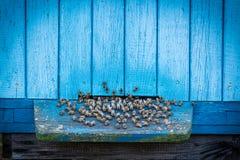 Colmenas azules con las abejas Fotografía de archivo libre de regalías