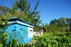 Colmenas azules de madera Apicultura natural en su patio trasero Agains Fotos de archivo