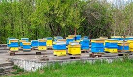 Colmenas azules y amarillas de la abeja Imágenes de archivo libres de regalías