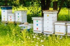 Colmenas blancas de abejas en el colmenar Fotos de archivo