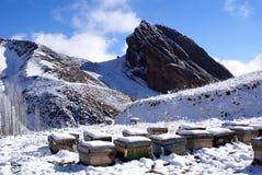 Colmenas cerca de la roca Foto de archivo libre de regalías