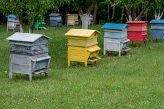 Colmenas coloridas Colmenas con las abejas en una granja de la miel Imagenes de archivo