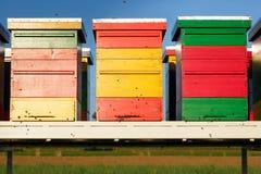 Colmenas coloridas con las abejas domesticadas en vuelo Foto de archivo libre de regalías