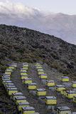 Colmenas coloridas con las abejas en un prado en la región de la montaña de la altura Fotografía de archivo
