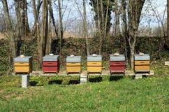 Colmenas coloridas de la abeja Fotos de archivo