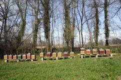 Colmenas coloridas de la abeja Imagen de archivo libre de regalías