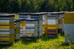 Colmenas coloridas de la abeja en día de verano caliente Foto de archivo