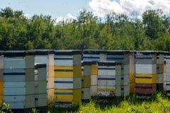 Colmenas coloridas de la abeja en día de verano caliente Fotografía de archivo libre de regalías
