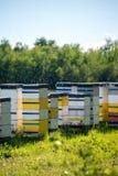 Colmenas coloridas de la abeja en día de verano caliente Imagen de archivo