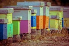 Colmenas coloridas de la abeja en fila en colores del vintage Imagen de archivo