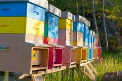 Colmenas coloridas en un campo Estación de verano Imágenes de archivo libres de regalías