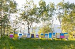 Colmenas coloridas en un campo Estación de verano Imagenes de archivo