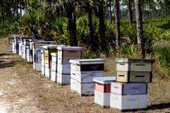 Colmenas comerciales de la abeja Foto de archivo libre de regalías