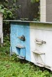 Colmenas con las abejas en el jardín entre el granjero del manzanar Fotos de archivo