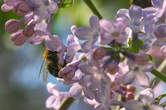 colmenas con las abejas en las flores Fotos de archivo libres de regalías