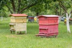 Colmenas con las abejas en una granja de la miel Imagenes de archivo