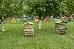 Colmenas con las abejas en una granja de la miel Foto de archivo libre de regalías