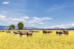 Colmenas con muchas abejas en vuelo Fotografía de archivo libre de regalías