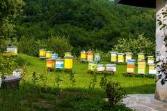 Colmenas de abejas en el colmenar Fotografía de archivo libre de regalías