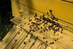 Colmenas de abejas en el colmenar Fotos de archivo
