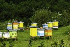 Colmenas de abejas en el colmenar Imagen de archivo libre de regalías