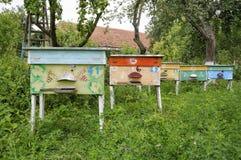 Colmenas de abejas en el colmenar Foto de archivo libre de regalías