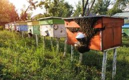 Colmenas de abejas en el colmenar Imágenes de archivo libres de regalías